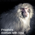 Prisoners of the zoo - Animals with Soul